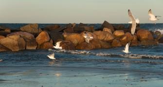 Birding on Cape Cod