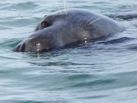 Seals on Nantucket Sound