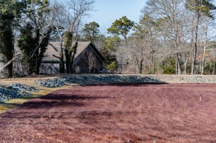 Cranberry Bog with house in the background