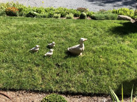 Duck art on the front grass