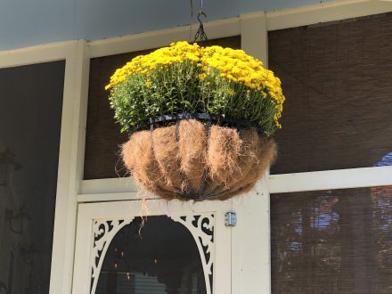 Hanging basket filled with yellow mums